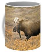 Young Bull Moose Coffee Mug