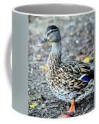 Young Female Mallard Coffee Mug