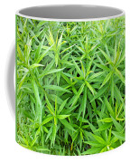 Young Goldenrod Before Blossoms Coffee Mug