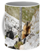Young Marmot Coffee Mug