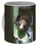 Young Mill Lake Frog Coffee Mug