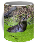 Young River Otter Egan's Creek Greenway Florida Coffee Mug