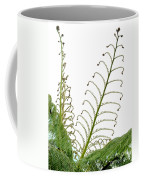 Young Spring Fronds Of Silver Tree Fern On White Coffee Mug