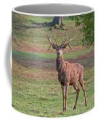 Young Stag Coffee Mug