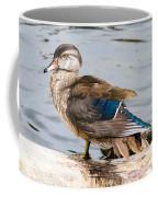 Young Wood Duck Coffee Mug