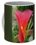 Zantedeschia Named Red Sox Coffee Mug by J McCombie