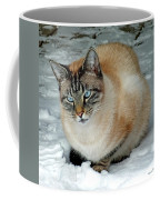 Zing The Cat On The Porch In The Snow 2 Coffee Mug