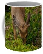 A Young Buck Grazing Coffee Mug