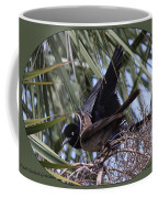 Boat-tailed Grackle - Quiscalus Major Coffee Mug