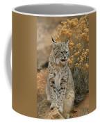 A Bobcat Coffee Mug by Norbert Rosing