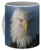 A Close View Of A Northern American Coffee Mug