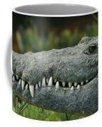 A Close View Of The Teeth Of An Coffee Mug