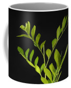 A Coffee Plant Coffea Arabica Coffee Mug