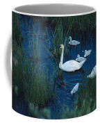 A Family Of Trumpeter Swans Swims Coffee Mug