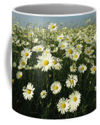 A Field Filled With Daisies In Bloom Coffee Mug