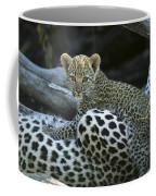 A Leopard  Cub, Panthera Pardus Coffee Mug