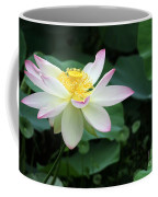 A Pink Tipped White Lotus Coffee Mug