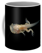 African Clawed Frog Tadpole Coffee Mug