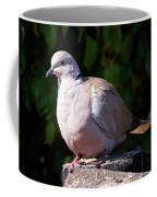 African Collared Dove  Coffee Mug