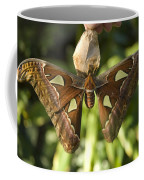 An Atlas Moth Atlas Attacus At The St Coffee Mug