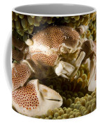 Anemone Or Porcelain Crab In Its Host Coffee Mug