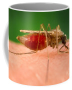 Anopheles Minimus, Malaria Vector Coffee Mug