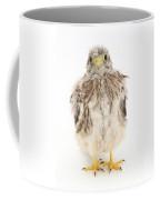 Baby Kestrel Coffee Mug