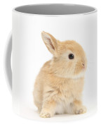 Baby Lop Rabbit Coffee Mug