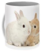 Baby Lop Rabbits Coffee Mug