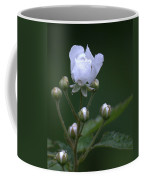 Blackberry Vine Flower Coffee Mug