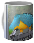 Blue And Yellow Macaw Coffee Mug