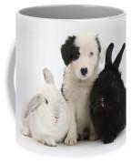 Border Collie Pups With Black Rabbit Coffee Mug