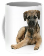 Border Terrier Puppy Coffee Mug
