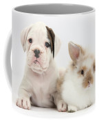 Boxer Puppy And Young Fluffy Rabbit Coffee Mug by Mark Taylor
