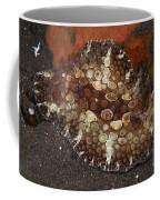 Brown And White Discodoris Nudibranch Coffee Mug