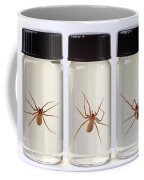 Brown Recluse Spider Coffee Mug