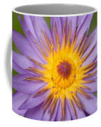 Cape Blue Waterlily Nymphaea Capensis Coffee Mug