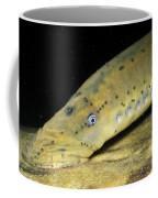 Chestnut Lamprey Coffee Mug