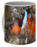 Cinnamon Clownfish In Its Host Anemone Coffee Mug