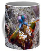 Close-up View Of A Mantis Shrimp, Papua Coffee Mug