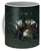 Coconut Octopus In Shell, North Coffee Mug
