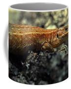 Common Lizard Coffee Mug