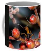 Curious Ant Coffee Mug