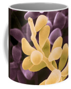 Curvularia Geniculata Coffee Mug