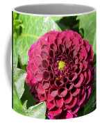 Dahlia Named Pride Of Place Coffee Mug