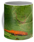 Easterm Newt Nnotophthalmus Viridescens 15 Coffee Mug