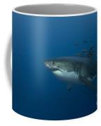 Female Great White Shark With A School Coffee Mug