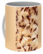 Formosan Termites Coffee Mug by Science Source