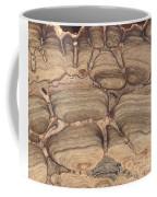 Fossil Stromatolite Coffee Mug