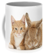 Ginger Kitten With Sandy Lionhead-cross Coffee Mug